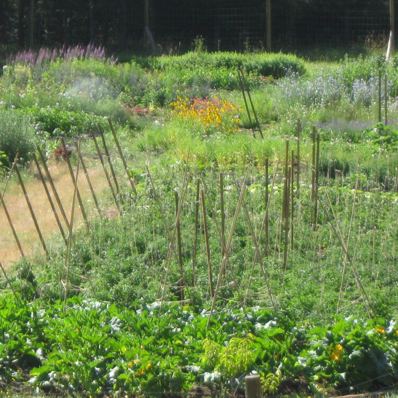 Organic Farming 101